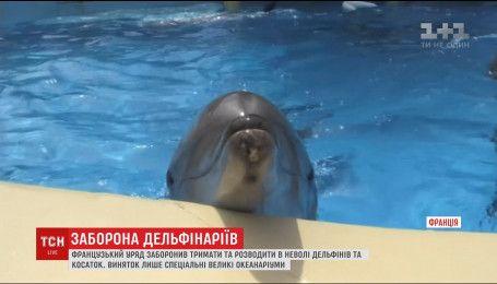 Правительство Франции запретило держать и разводить в неволе дельфинов и касаток