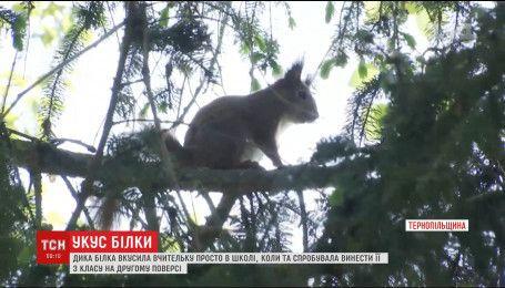 На Тернопільщині дика білка покусала вчительку просто в школі