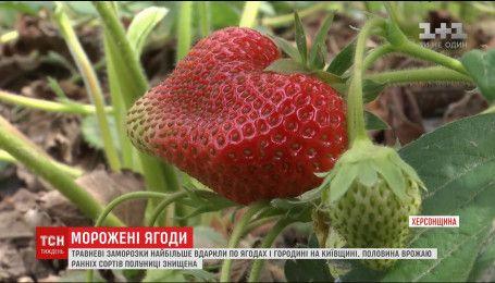 Весенние заморозки ударили по ягодах и овощах, что повлекло их подорожания