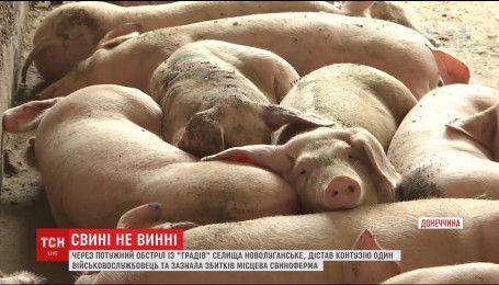 В поселке Новолуганское боевики попали по свиноферме, где выращивают 92 тысяч животных