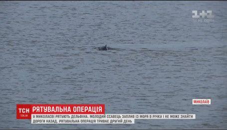 В Николаеве пытаются спасти дельфина, который заплыл с моря в реку