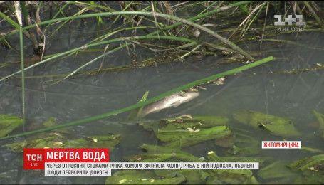Из-за отравления стоками река Хомора стала серо-белого цвета