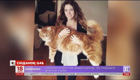 В Австралии появился претендент на звание самого длинного кота в мире