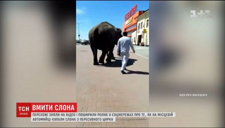 У мережі з'явилось відео, як на одній з чернівецьких автомийок купають слона
