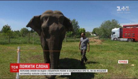 На чернівецькій автомийці влаштували водні процедури для слона