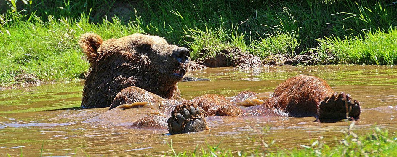 Під Житомиром відкрили притулок для ведмедів, яких врятували від знущань