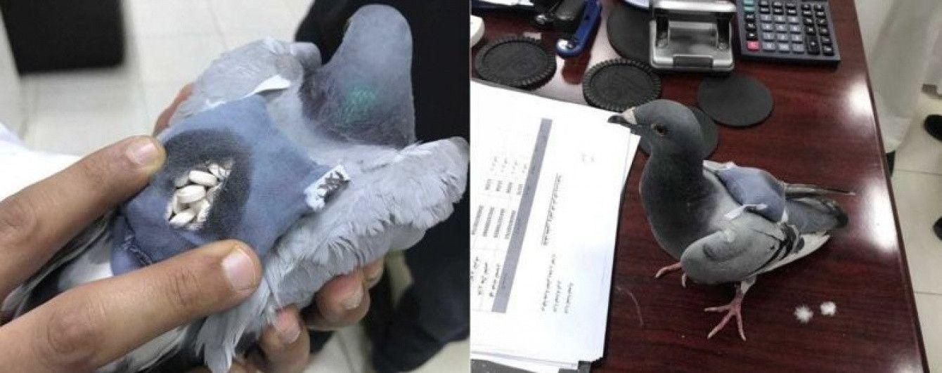В Кувейті спіймали голуба з рюкзачком наркотиків