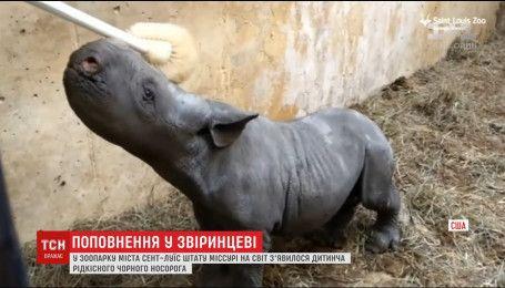 В зверинце штата Миссури на свет появился детеныш черного носорога