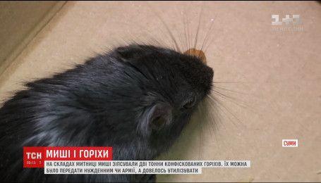 Сумской таможенник на сессии заявил, что не передадут 2 тонны орехов нуждающимся, потому что их съели мыши