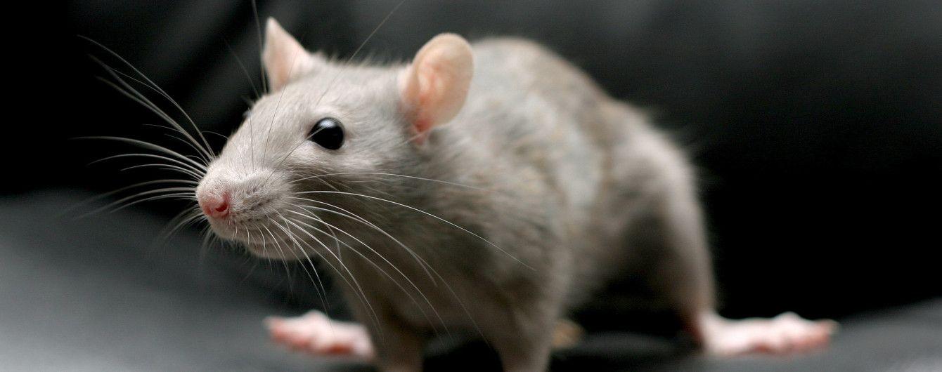 """У Сумах загадкові """"миші"""" з'їли дві тонни горіхів, котрі хотіли віддати армії"""