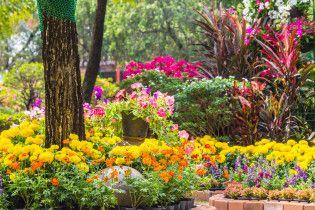 Как стимулировать цветение клумбы