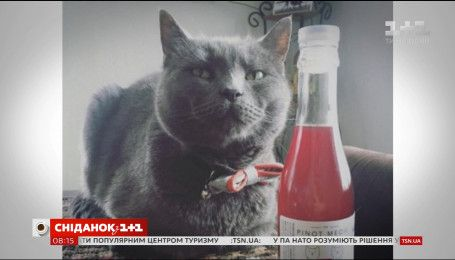 В США появилось вино для кошек