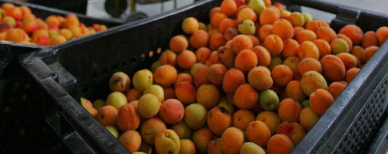 Весняні заморозки знищили третину врожаю фруктів та ягід. Прогноз Мінагрополітики