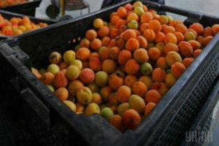 Полезны ли уличные абрикосы и вишни. Диетолог рассказал страшную правду