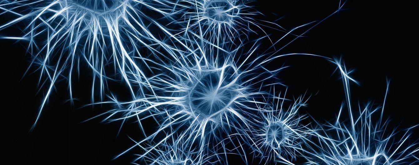 Супрун рассказала, восстанавливаются ли нервные клетки