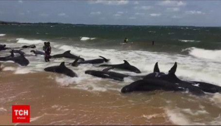 Более 20 китов выбросились на берег в Шри-Ланке