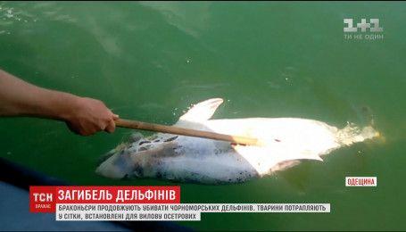 Браконьеры на Одесчине прямо на территории биосферного заповедника убивают дельфинов