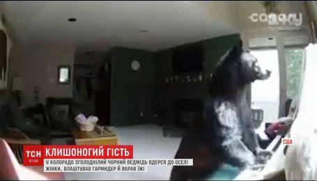 В США голодный медведь устроил беспорядок в доме женщины, пока та была на работе