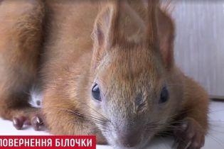 Детектив с хэппи-эндом: в Киеве через неделю отыскали бельчонка, который исчез из квартиры на шестом этаже