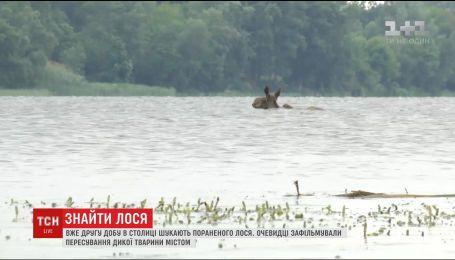 У Києві другу добу шукають пораненого лося