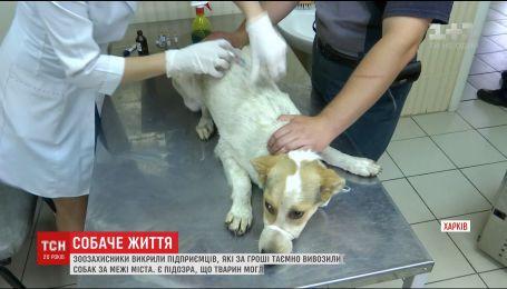 Бізнес на псах: приватні підприємці у Дніпрі за гроші позбувались вуличних собак