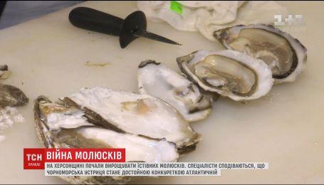 Експеримент ТСН: чи зможе чорноморські устриці конкурувати з атлантичними