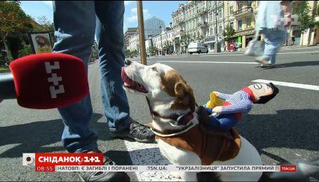 В Киеве состоялся костюмированный парад собак породы джек-рассел-терьер