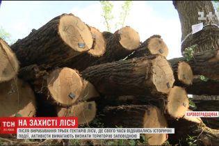 На Кировоградщине вырубили около трех гектаров исторического леса