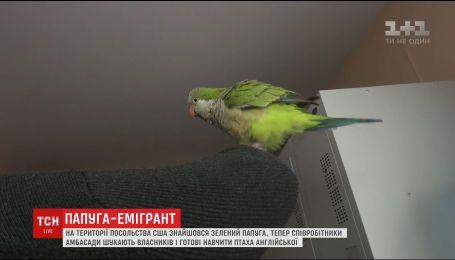В столице потерялся зеленый попугай, а новый приют нашел в посольстве США