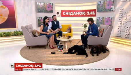 Власник лабрадорів-ретриверів розповів, чому ця порода собак найкраща для сімей з дітьми