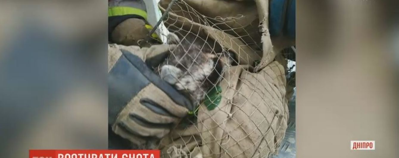 Спасатели в Днепре два часа доставали с дерева испуганного енота
