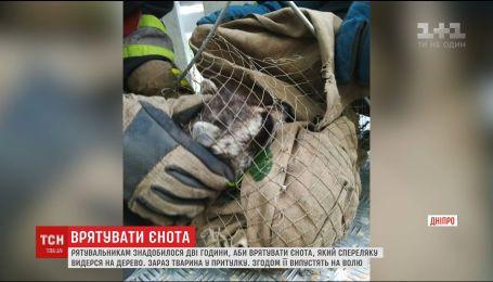 У Дніпрі дві години рятувальники знімали з дерева єнота