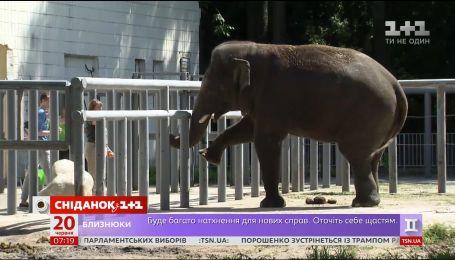 Планета відзначає Всесвітній день захисту слонів у зоопарках