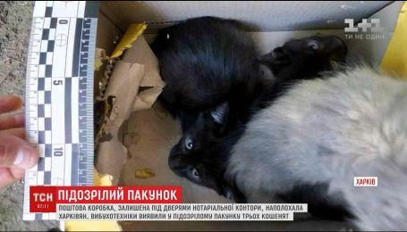 В подброшенной коробке, через которую окружили нотариальную контору в Харькове, нашли котят