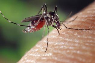 """Вчені дізналися, яка кров найбільше """"смакує"""" комарам"""