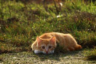 В Новой Зеландии кот, который любит воровать белье, поссорил влюбленную пару