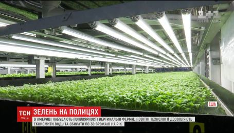 В Соединенных Штатах приобретают популярность вертикальные фермы