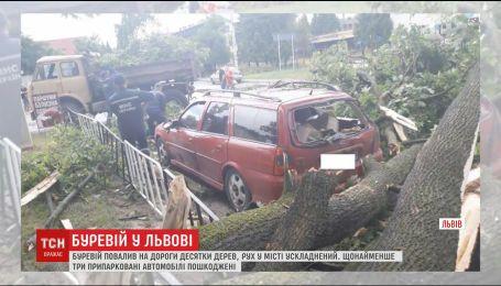 Повалені дерева та зірвані дахи: Львів оговтується від шквального вітру і грози
