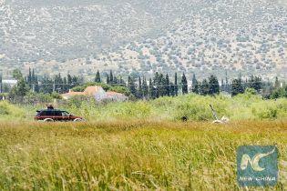 Смертельна аварія гвинтокрила у Греції: останні хвилини польоту транслювалися до соцмережі