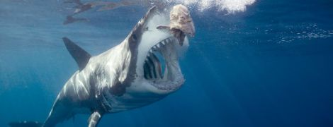 В Японии нашли мертвую двухтонную акулу, которая подавилась черепахой