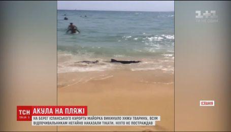 На іспанському курорті Майорка акула вибралася на пісок поблизу відпочивальників