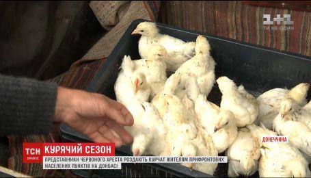 Благотворители бесплатно раздают цыплят жителям прифронтовых поселков
