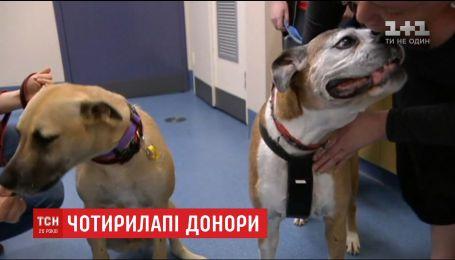 У Австралії створили центр донорської крові для собак