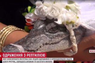 Мексиканский мэр женился на крокодилице