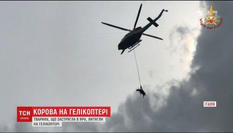 В Италии задействовали вертолет, чтобы спасти корову, которая застряла в овраге