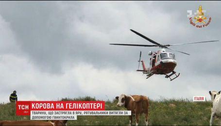 Итальянским спасателям пришлось использовать вертолет, чтобы извлечь корову из оврага