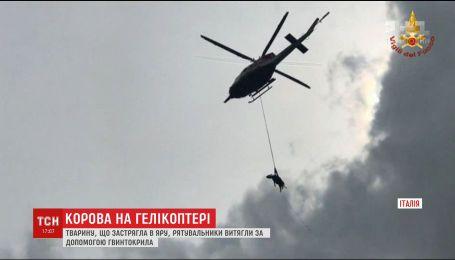 В Италии устроили спасательную операцию с вертолетом ради спасения коровы