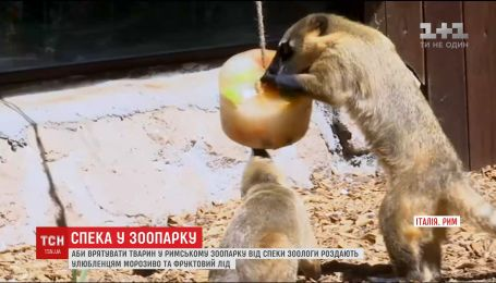 В римском зоопарке животных кормят мороженым, чтобы спасти от жары