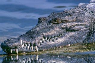 В США несколько аллигаторов вмерзли в лед из-за аномально холодной погоды
