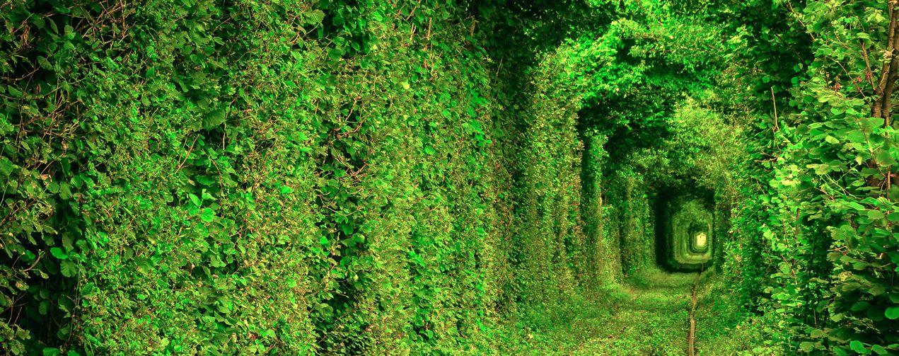 Тунель кохання (Рівненська обл. село Клевань)